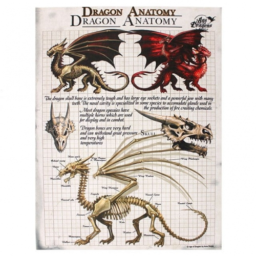 Dragon Anatomy Age Of Dragons Anne Stokes
